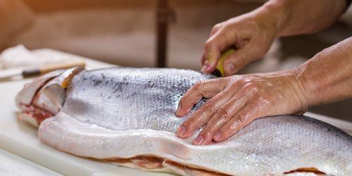 Male hand on raw fish. Big fish on cooking board. Fresh salmon for preparing makizushi. Gift of the sea.